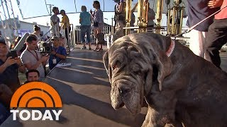Meet the winner of this year's World's Ugliest Dog Contest | TODAY