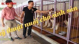 Kỹ thuật nuôi chó sİnh sản - nuôi chó thịt mô hình trang trại