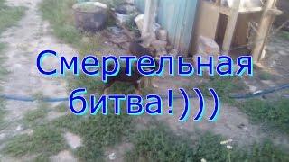 Бой собак, смертельная битва:)