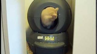 Litter Robot moving and making its sound