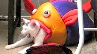 TRY NOT TO LAUGH or GRIN - Funny Animals Compilation 2018 | Funniest Animals Videos by Life Awesome