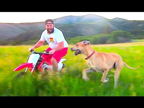 RACING A GREAT DANE ON A MOTORCYCLE!