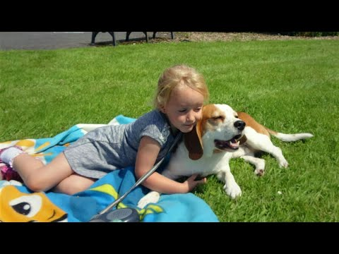 Why Beagles are Perfect Family Dogs