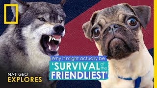 Why It Actually Might Be 'Survival of the Friendliest' | Nat Geo Explores