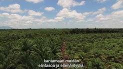 Pitääkö palmuöljyä boikotoida?