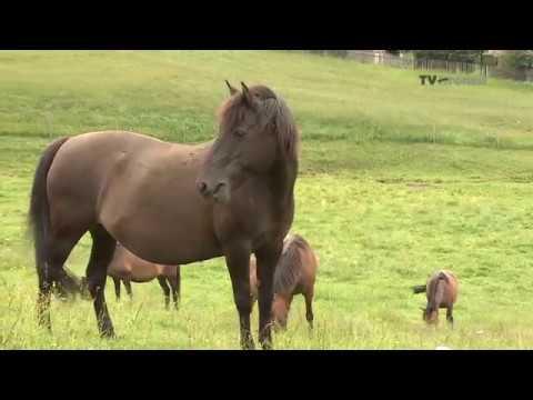 Výnimoční - Chovateľ divokých koní