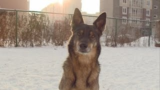 В Красноярске хотят снести площадку для выгула собак на улице Алексеева