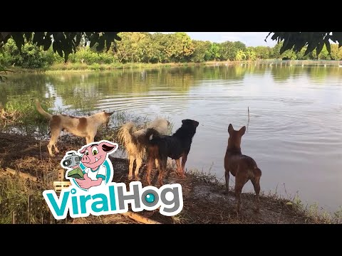 Dog Owner Plays Prank on Furry Friends || ViralHog