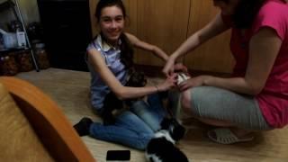 Покупка второй собаки)) Дочка не может поверить!!