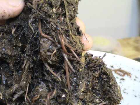 How To Find Your Own Compost Worms.