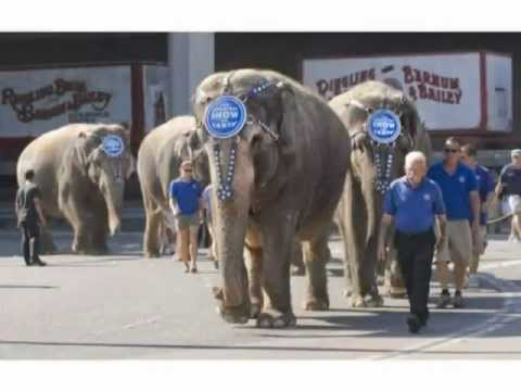 Anaheim Patrons Want Ban on Federal Cruelty of Wild Animal Acts and Criminal Ringling Bros Circus