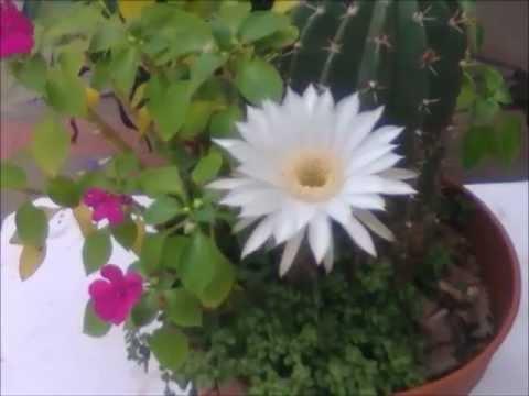 Cactus de jardin con flores y plantas crasas primavera - Jardines con rosas ...