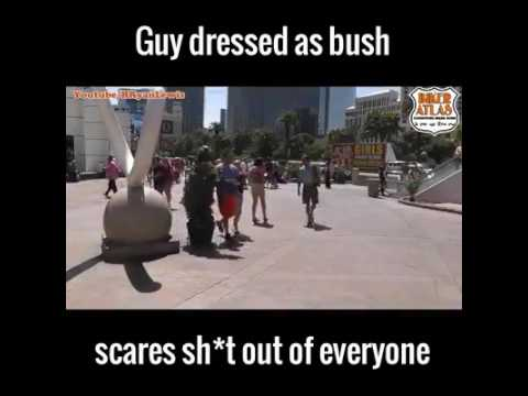 Guy dress up as a Bush scares people