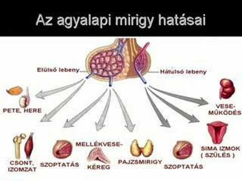 Az agyalapi mirigy adenoma eltávolítása: műtét típusai és jellemzői - Szívroham