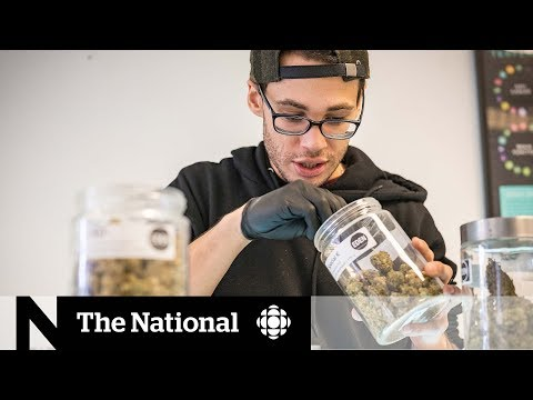 Pot Industry Brings Plenty Of Jobs To Canadians