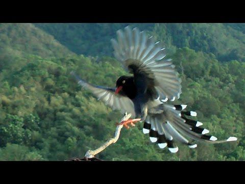 野鳥70種(70 Kinds Wild Bird )