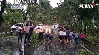 Download Penampakan Pohon Tumbang di Jalan A Yani Surabaya