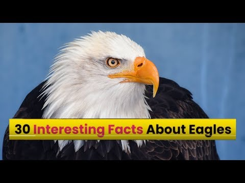 Top 30 Amazing Facts About Eagles