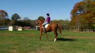 Lego Horse 6 yr old Chestnut Thoroughbred Gelding for Sale Camp Curiosity Stables Bucks County PA