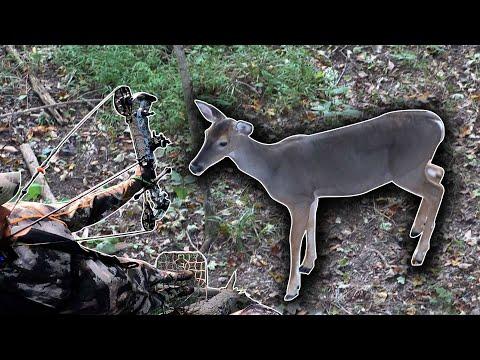 Two Deer Down! Bowhunting Early Season!