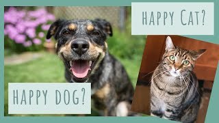 Is your dog or cat happy? How to tell and what you can do about it!