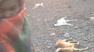 In Northeast Ethiopia drought is killing animals
