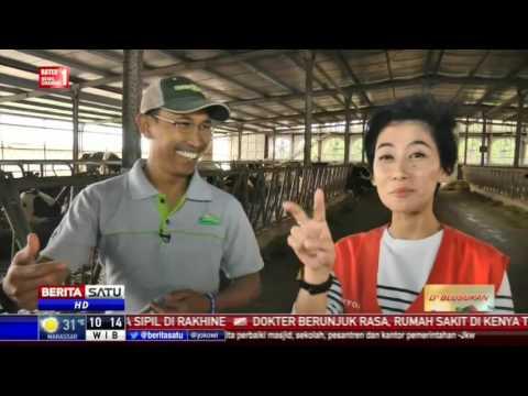 Liputan Program D'Blusukan - Berita Satu TV di Peternakan Greenfields, Malang Jawa Timur