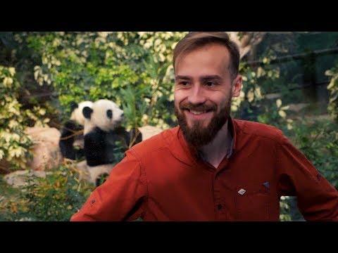 Пора Валить - Песня про панду