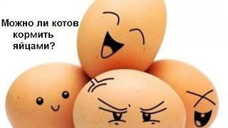 Можно ли кормить кота (кошку) яйцами?