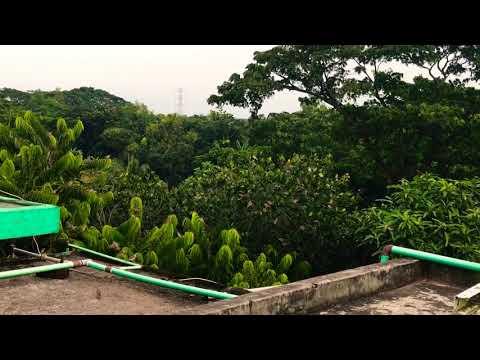 বাবুই পাখির অভয়ারন্য   কিচি মিচি ডাক   Bachi Bird's Wildlife Sanctuary Michi Post