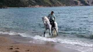 Конный лагерь на море / Коњ камп на мору 2.0
