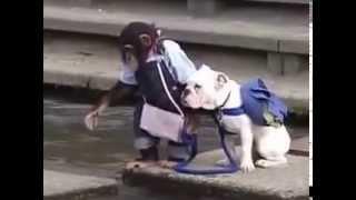 LUCU BANGET !!  monyet dan anjing nyebrang sungai
