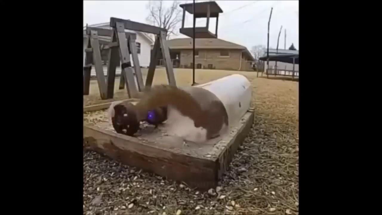 Eichhörnchen wird beim Fressen gestört