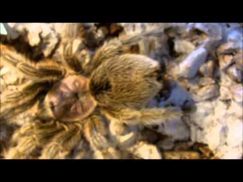 Tarantula Feeding Video 124  - Part 2 - More Variety :)