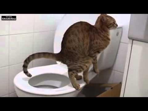 Chat trop dr le qui fait ses croute au toilette youtube - Photo chat marrant ...