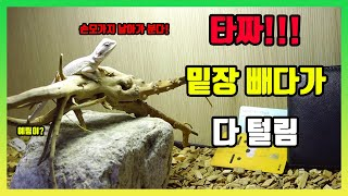 파충류 비어디와 타짜 ... 도박예방 영상 [팣팣팣]