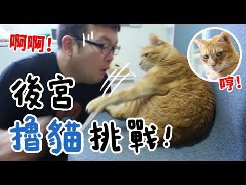 【黃阿瑪的後宮生活】後宮擼貓挑戰!