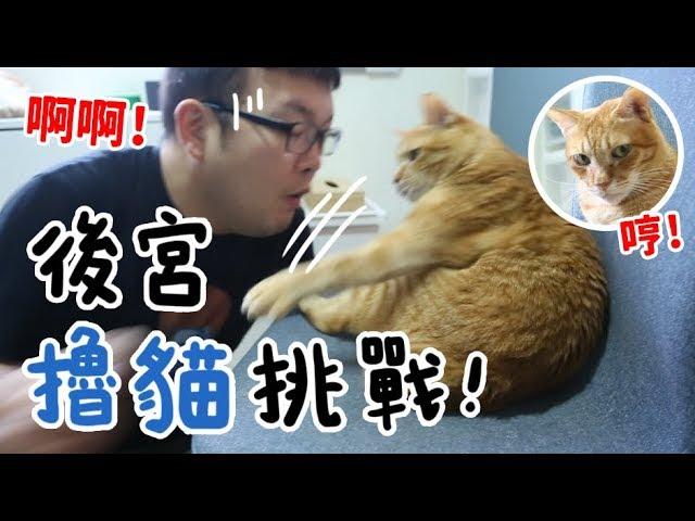 黃阿瑪的後宮生活-後宮擼貓挑戰