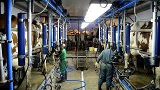Après midi d'hiver à la ferme #soins des animaux /traite curage...