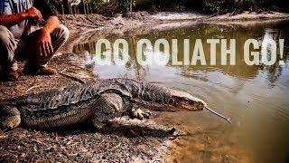goliath-swim-poop-eat-fish-at-the-kamp-kenan-pond