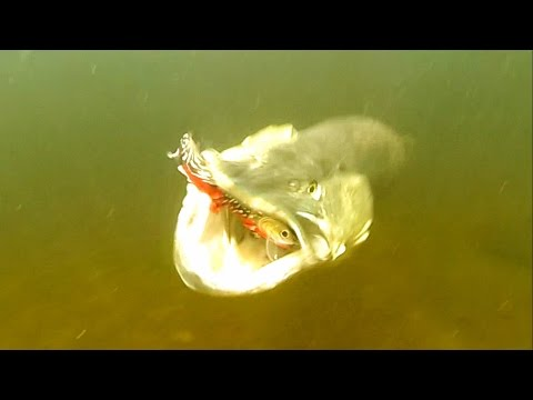 Top 10 Pike Attacks 2015 From Underwater Ireland. Fishing Lures. Рыбалка: атаки щуки.