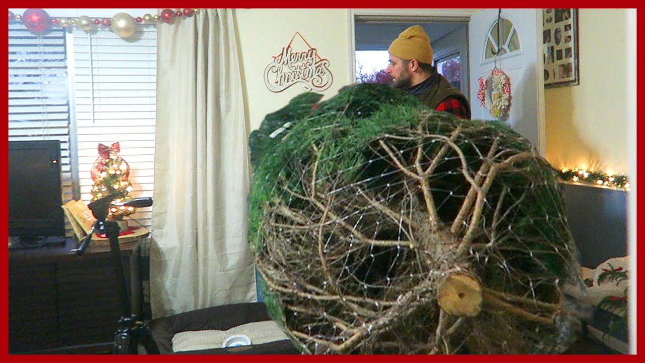 The christmas tree is too big youtube Big christmas tree small space