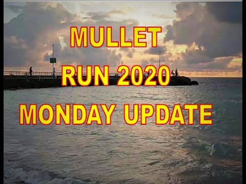 Mullet Run 2020, Monday  Jupiter Inlet Update...They're Here!
