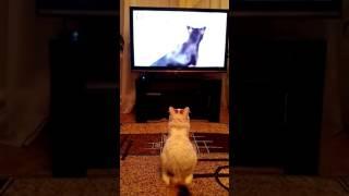 Глория смотрит сериал о животных. Не мешай,на самом интересном месте...!!!
