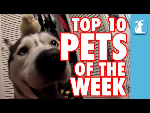 Enjoy The Funniest Pets Caught On Tape This Week!