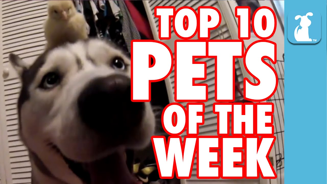 Most Epic Pets of the Week || Oct 30th 2015