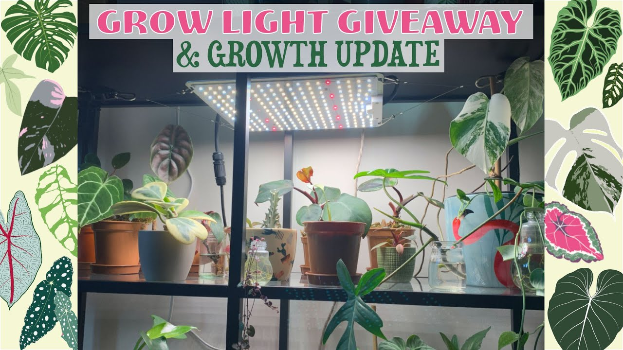 Spider Farmer Grow Light Giveaway ✨💚 Propagation/Growth Update! 🌿