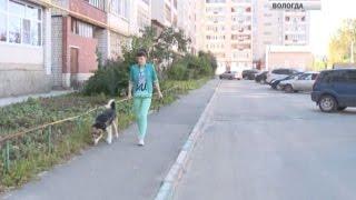 Вологжанин обвиняется в мошенничестве при продаже животных