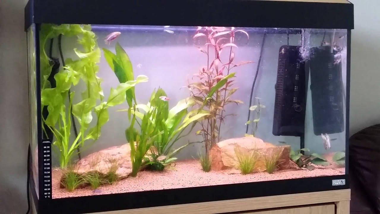 Fluval Roma 125 Aquarium 1000 Aquarium Ideas