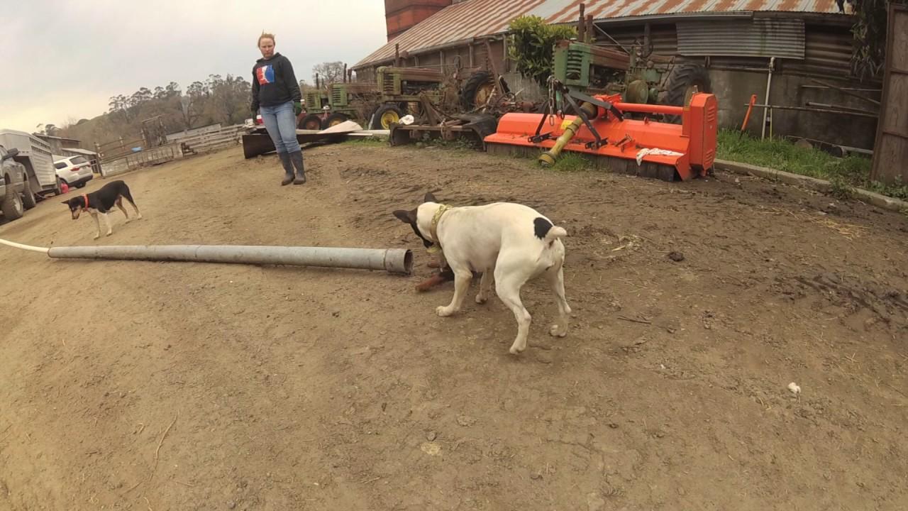 Real Barn Hunt